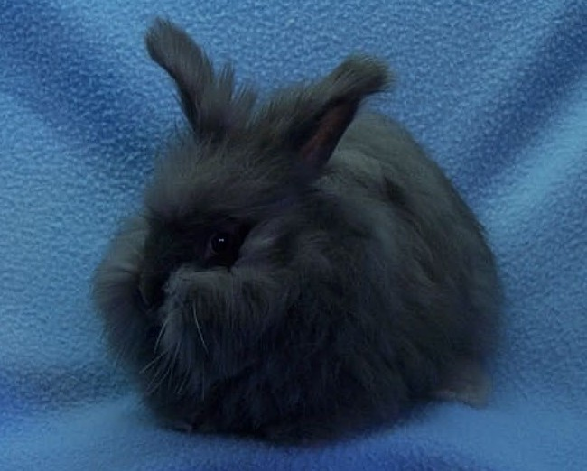 Rabbit Breeds and Colours
